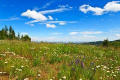 wildflowers горы Стоковое Изображение RF