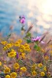 Wildflowers лета на заходе солнца освещают на предпосылке моря Стоковое Изображение RF