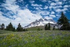 Wildflowers лета на наклонах клобука держателя, Орегона стоковое изображение rf