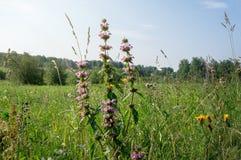 Wildflowers лета на луге утра Стоковая Фотография