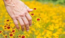 Wildflowers женской руки касающие Стоковые Изображения