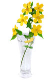 Wildflowers желтого цвета ноготк болотоа в вазе изолированной на белизне  стоковая фотография rf