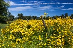 Wildflowers желтого цвета падения Вирджинии Стоковые Изображения