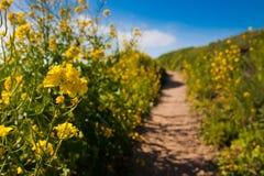 Wildflowers зацветая в проселочной дороге стоковое изображение rf