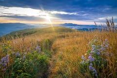 Wildflowers и загородка вдоль аппалачского следа 3 Стоковое фото RF
