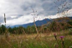 Wildflowers и трава против фона гор carpathians Стоковое фото RF
