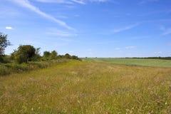 Wildflowers и травы Стоковое Фото