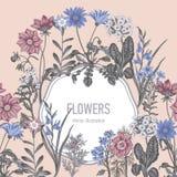 Wildflowers Иллюстрация вектора в типе год сбора винограда праздничная открытка Стоковые Фото