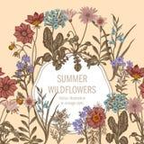 Wildflowers Иллюстрация вектора в типе год сбора винограда праздничная открытка Стоковая Фотография