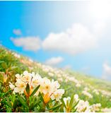 Wildflowers иллюстрация подарка конструкции карточки предпосылки флористическая ваша Стоковое Изображение