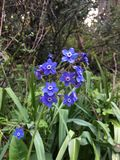 Wildflowers Калифорнии Стоковое Фото