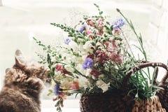 Wildflowers кота пахнуть в плетеной сумке на деревенском белом окне C Стоковое фото RF