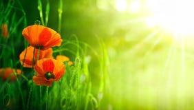 Wildflowers, красные маки в природе Стоковые Изображения RF