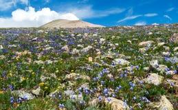 wildflowers лета поля Стоковая Фотография