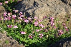 Wildflowers между утесами Стоковое Изображение RF