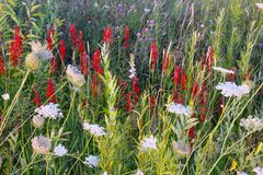 Wildflowers Мичигана Стоковые Фото