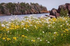 Wildflowers на береге стоковая фотография rf