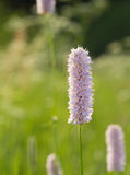 Wildflowers на заходе солнца Стоковые Фотографии RF