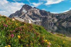 Wildflowers на озере Sawtooth, Айдахо стоковые фотографии rf