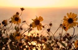 Wildflowers на пляже положения Torrance, Los Angeles County, Калифорнии стоковые изображения rf