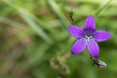 Wildflowers на предпосылке захода солнца Стоковое Фото