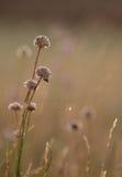 Wildflowers на предпосылке заходящего солнца Стоковые Изображения RF