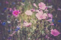 Wildflowers на луге Стоковые Фотографии RF