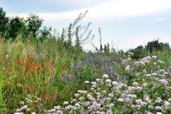 Wildflowers на луге Стоковые Фото