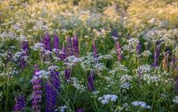 Wildflowers на яркие 2 Стоковые Изображения RF