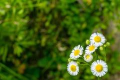 Wildflowers обочины Стоковая Фотография