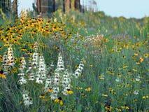 Wildflowers обочины Стоковые Изображения