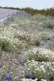 Wildflowers обочины Стоковое Изображение