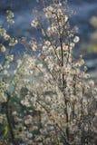 Wildflowers осени Стоковые Изображения RF