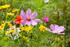Wildflowers растя в луге Стоковое Изображение