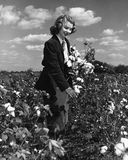 Wildflowers рудоразборки женщины в поле (все показанные люди более длинные живущие и никакое имущество не существует Гарантии пос Стоковые Изображения