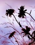 wildflowers силуэта Стоковая Фотография RF