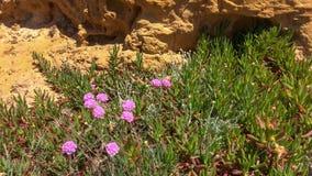 Wildflowers сирени Стоковое Изображение RF