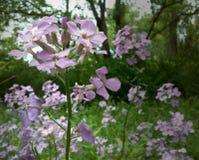 Wildflowers страны Стоковое Изображение