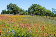 Wildflowers Техаса каменщика Стоковое Изображение