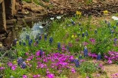 Wildflowers Техаса The Creek стоковая фотография