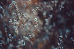 wildflowers Imagem de Stock