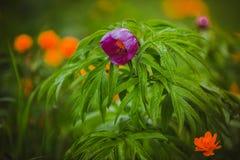 wildflowers Obrazy Stock
