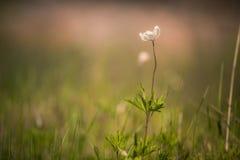 Wildflowers Стоковое Изображение