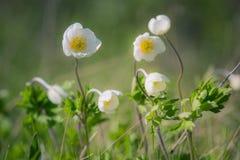 wildflowers Obraz Stock