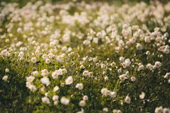 wildflowers Obrazy Royalty Free