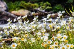Wildflowers Стоковое фото RF