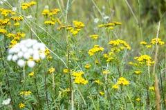 wildflowers imagens de stock