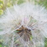 Wildflowers στοκ εικόνες με δικαίωμα ελεύθερης χρήσης