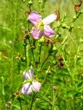 wildflowers imágenes de archivo libres de regalías