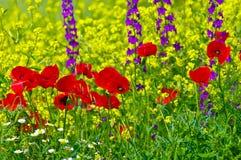 Wildflowers. fotografia stock libera da diritti
